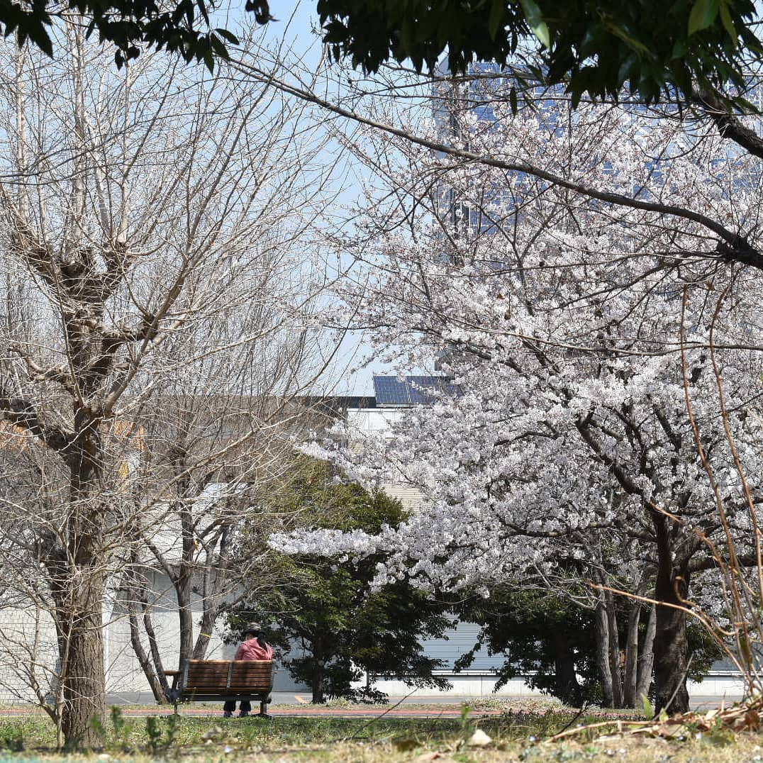 本日はたくさんのご来店ありがとうございました。  たまにはいつもと違う投稿如何でしょうか?  サザエさんの次回予告の雰囲気をイメージしながら読んで下さい。  さーて! 明日の日曜日の香澄は?  アルバイトのひかるです!  向かいにある では桜がとてもキレイに咲いています。 マスターったら桜見るには珈琲みたらし団子とコーヒーがないといけないと言って、珈琲1杯とお団子5つ持って行こうとするの! 「ありゃまた太るわ」って、つい心の声が漏れちゃった  さて日曜日の香澄は  ・マスターのウエスト  ・アロマのなやみ  ・ひかるの「春なのに」  の3本です!  是非ご来店下さい。  ネタだらけのマスターだけじゃなく、ひかるにも会いに来て下さいね♪  ジャン    ケン      ぽん! ・ ・ ・   # 喫茶店