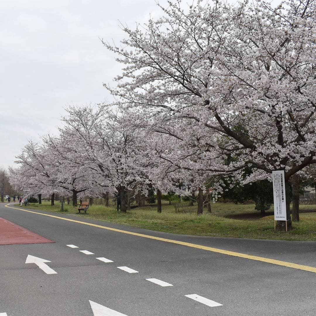 桜の花が満開です。  を歩かれている方はゆっくり歩かれているというか、写真を撮ってゆかれます。  予報より風も無くて桜も楽しめます。  是非お出掛け下さい。  皆様の1日が健やかで幸せにありますように そして今日出逢う珈琲が皆様に幸せを運べますように          # 喫茶店