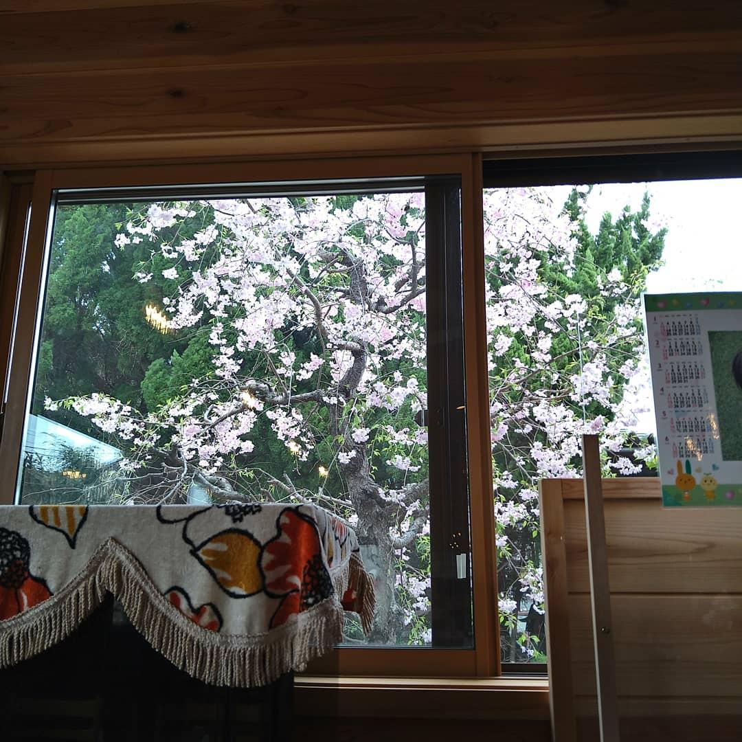 店内からの花見は 1番良い頃と思います。  珈琲を飲みながら桜を愛で時間を忘れるなんて贅沢如何でしょうか?  本日のコーヒーは モカレケンプティ アイスブレンド デカフェ   です。  皆様の1日が健やかで幸せにありますように そして今日出逢う珈琲が皆様に幸せを運べますように          # 喫茶店