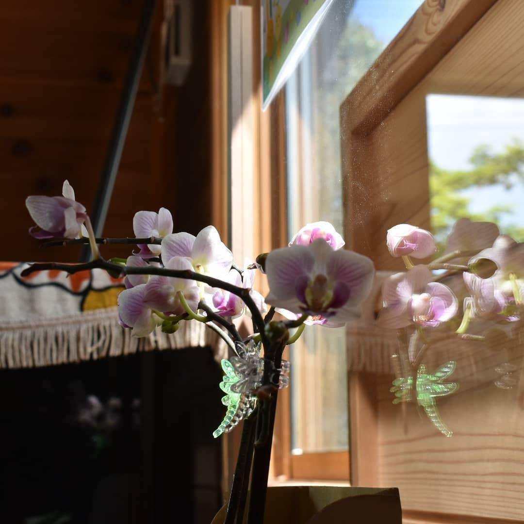 嬉しいこと! お客様から頂いた胡蝶蘭が2ヶ月ほど経ってもとってもきれいな花を咲かせていること! 新しい蕾が出てきていること! いらっしゃったお客様達と一緒に喜べること!  幸せです  今日も本日のコーヒーのホットはモカ(エチオピア)ゲイシャです。8キロ焙煎して3分の1程減りました。  ご興味のある方は是非お早めにどうぞ!  皆様の1日が健やかで幸せにありますようにそして今日出逢う珈琲が皆様に幸せを運べますように           # 喫茶店  #五家宝